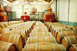 Oak Barrels of Rum Ready for Distribution