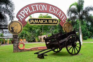 appleton estate rum day tour