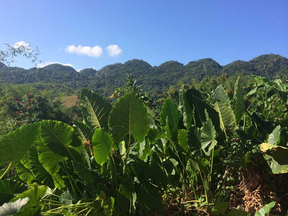 eco tour jamaica eco hike jamaica