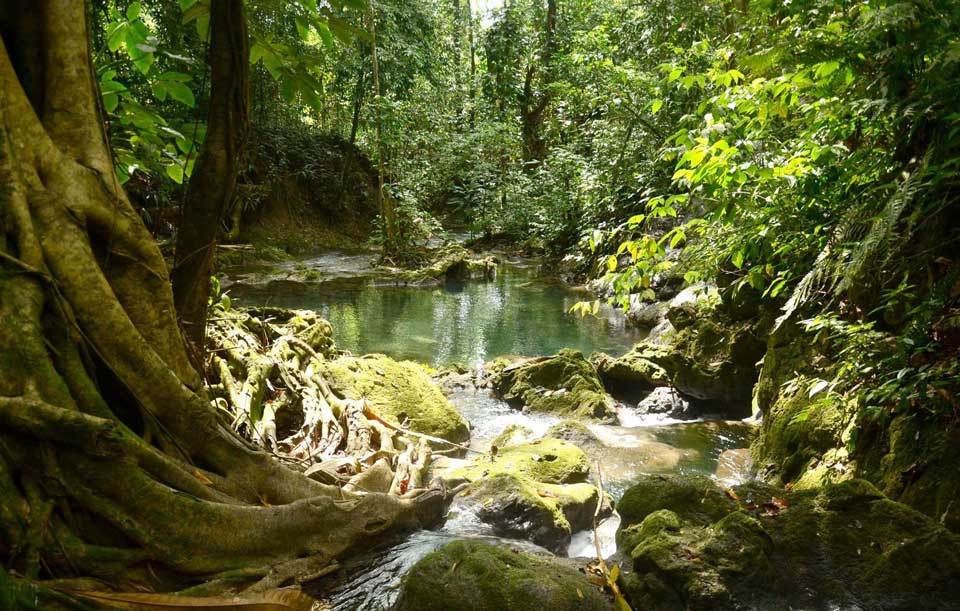 Jamaican Mountain River Springs Eco Tour